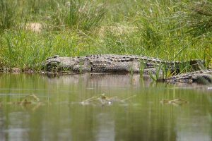 Crocodile Gallery at Beestpoort Safari in Gauteng